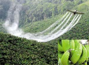 Agrotóxico em bananal