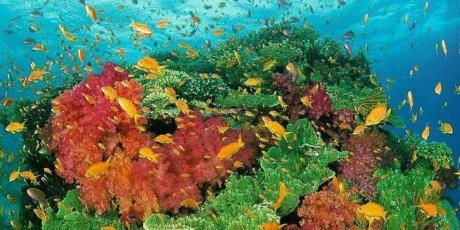 24 horas para salvar nossos oceanos