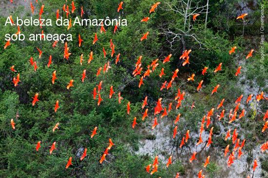 Amazônia sob ameaça