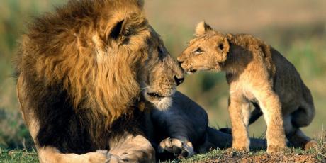 1 Milhão para proibir o comércio de leões