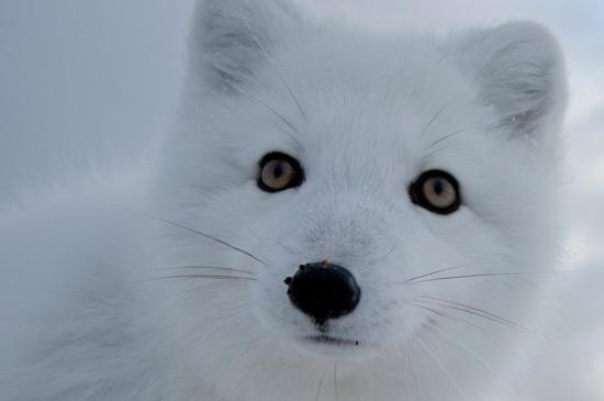 Diga não a exploração do Ártico!