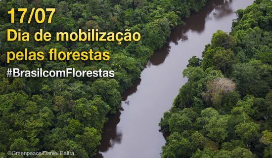 Hoje é o dia da Mobilização pelas Florestas