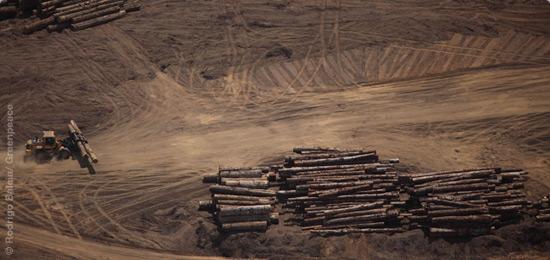 Pilhas de árvores no chão
