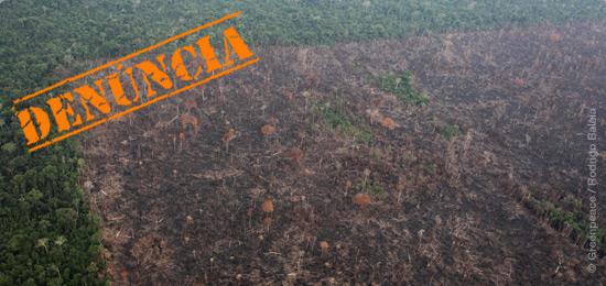 Denúncia: Devastação e impunidade na Amazônia
