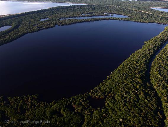 Menor taxa de desmatamento já registrada na Amazônia