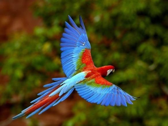 Amazônia, um pedido de ajuda