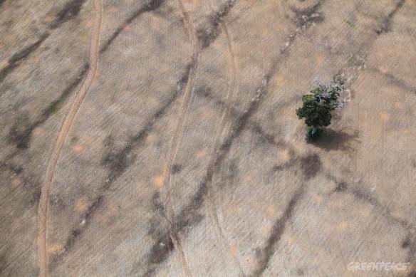 O desmatamento está caindo ano a ano