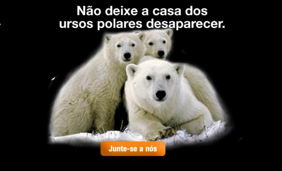 Urso polar branco