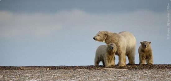 Ártico desprotegido
