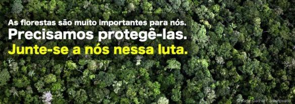 Greenpeace Brasil - A importância das grandes árvores
