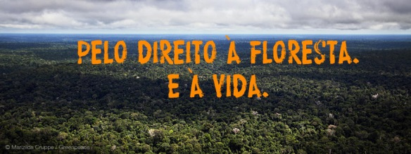 Pelo fim dos conflitos na Amazônia, Greenpeace, Dialison Cleber Vitti, Dialison Cleber, Dialison Vitti, Dialison, Cleber Vitti, Vitti, #DialisonCleberVitti, @dcvitti, dcvitti, #blogdodcvitti, Ilhota,