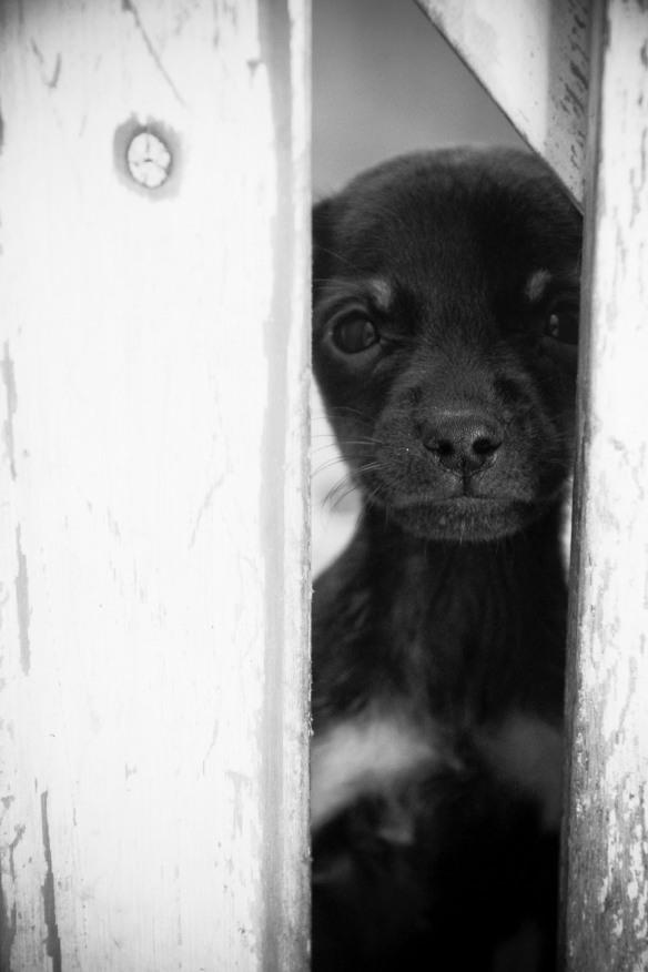Quem adotar animal abandonado terá desconto no IPTU, Dialison Cleber Vitti, Dialison Cleber, Dialison Vitti, Dialison, Cleber Vitti, Vitti, #DialisonCleberVitti, @dcvitti, dcvitti, #blogdodcvitti, Ilhota, 2014