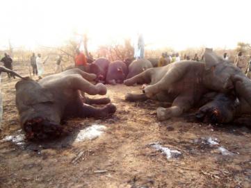 Elefantes mortos, Elefante, Dialison Cleber Vitti, Dialison Cleber, Dialison Vitti, Dialison, Cleber Vitti, Vitti, #DialisonCleberVitti, @dcvitti, dcvitti, #blogdodcvitti, Ilhota, 2016, Newsletter, Feed
