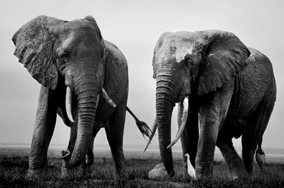 Elefante, Dialison Cleber Vitti, Dialison Cleber, Dialison Vitti, Dialison, Cleber Vitti, Vitti, #DialisonCleberVitti, @dcvitti, dcvitti, #blogdodcvitti, Ilhota, 2016, Newsletter, Feed