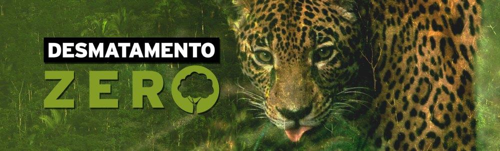Desmatamento Zero, Greenpeace, Dialison, Dialison Cleber, Dialison Cleber Vitti, DialisonCleberVitti, Dialison Vitti, Dialison Ilhota, Cleber Vitti, Vitti, dcvitti, @dcvitti, #dcvitti, #DialisonCleberVitti, #blogdodcvitti, blogdodcvitti, blog do dcvitti, Ilhota, Newsletter, Feed, 2016, ツ