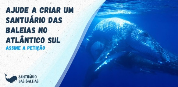 Santuário de Baleias do Atlântico Sul, Dialison, Dialison Cleber, Dialison Cleber Vitti, DialisonCleberVitti, Dialison Vitti, Dialison Ilhota, Cleber Vitti, Vitti, dcvitti, @dcvitti, #dcvitti, #DialisonCleberVitti, #blogdodcvitti, blogdodcvitti, blog do dcvitti, Ilhota, Newsletter, Feed, 2016, ツ