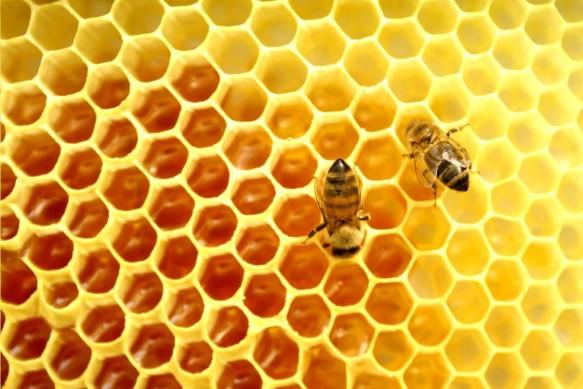 Produção de mel em Santa Catarina