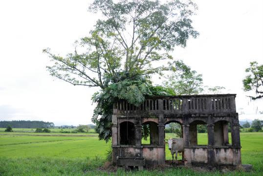 Antiga construção se destaca nos arrozais de Ilhota