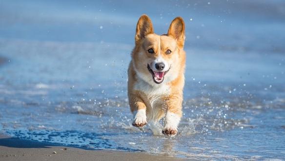 Cachorro andando na água
