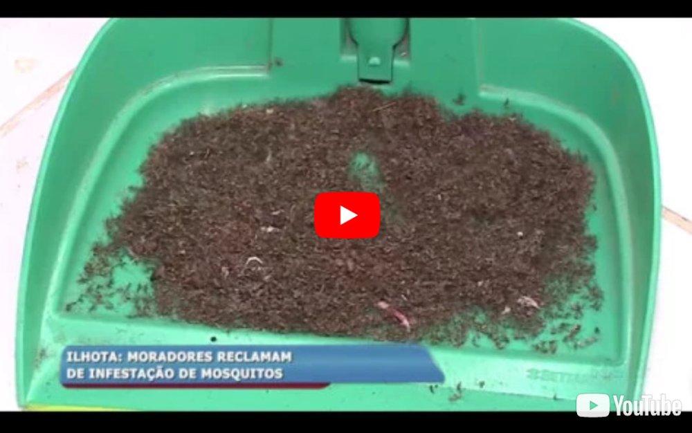 Moradores de Ilhota reclamam de infestação de mosquitos