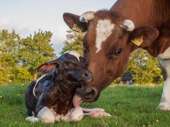 A insuportável crueldade da carne