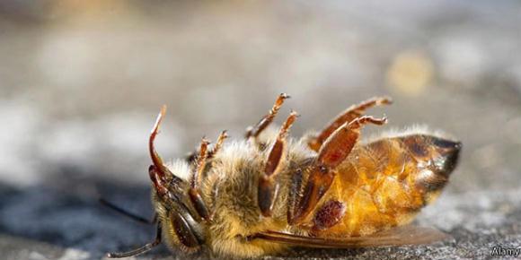 Sem abelha sem alimento