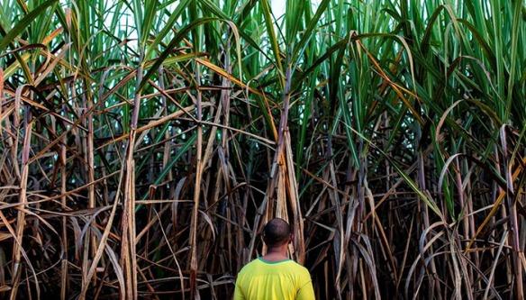 Agricultores industriais brasileiros pulverizam produtos químicos perigosos perto de escolas e comunidades