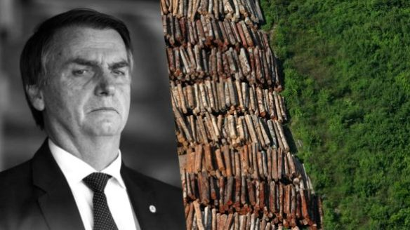 Bolsonaro e o meio ambiente